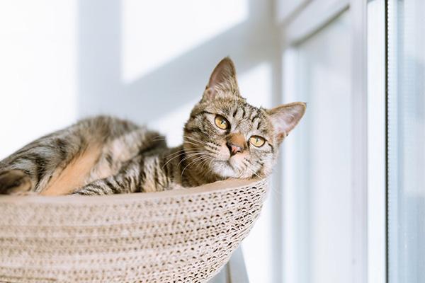 La Journée du chat