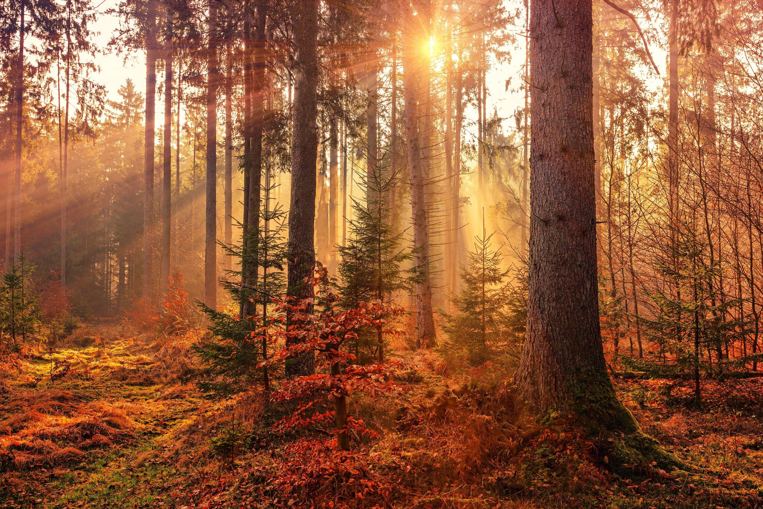 Cartes animées automne