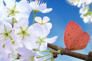 Frühling - Neugeburt der Natur