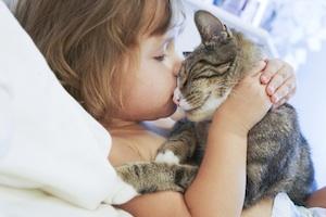 Gros câlin avec un chat