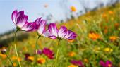 Semis de fleurs faciles à réussir