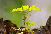 En novembre on plante arbustes et rosiers