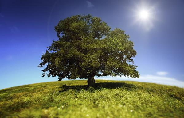 Plantes et arbres pour un air sain