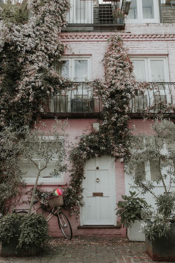Plantes grimpantes fleuries