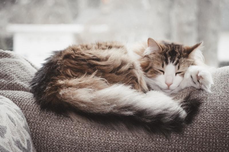 Un chat qui dort