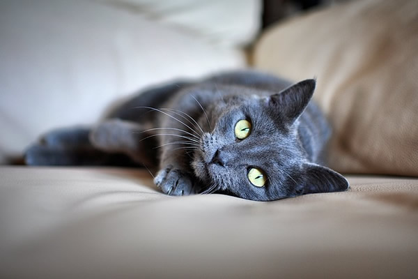 magnifique chat