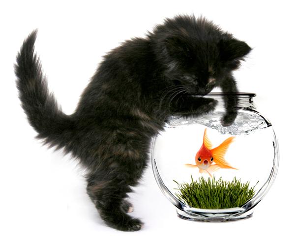 poisson d'avril : chat coquin et poisson dans un bocal