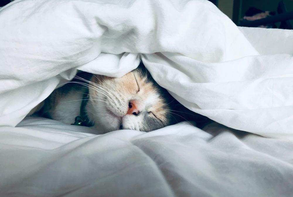 Chat sous la couette