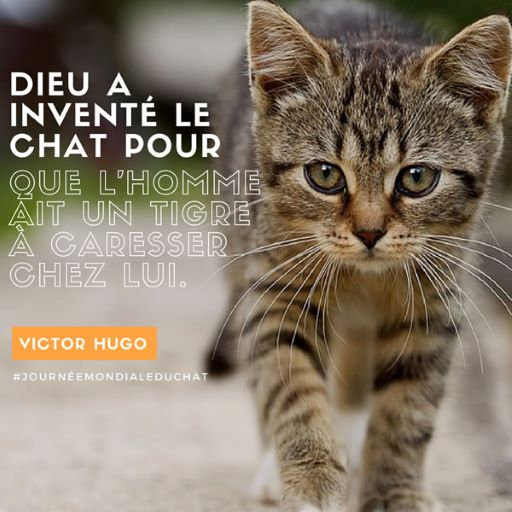 Citations Sur Les Chats