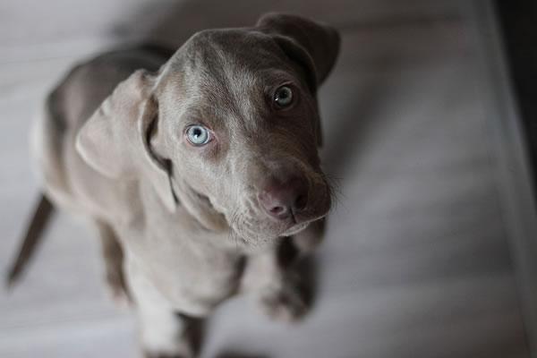 Très beau chien