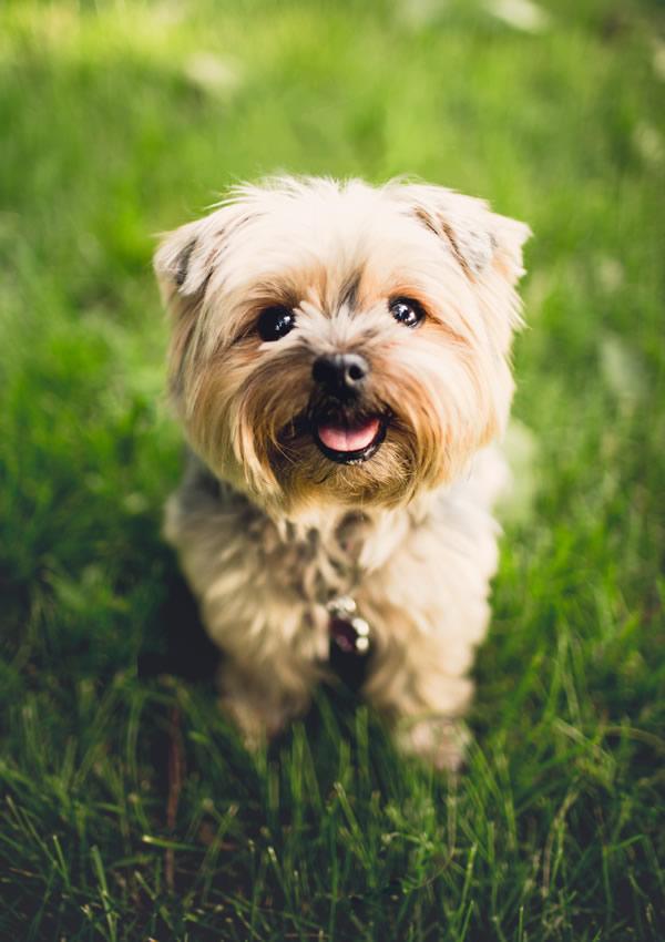 Adorable chien