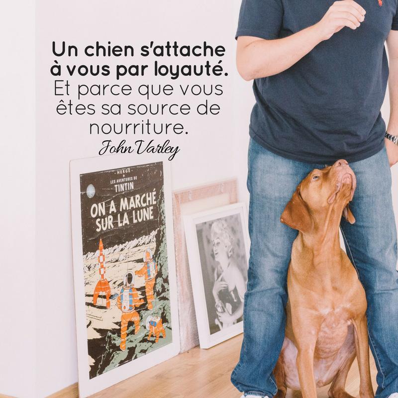 Un chien s'attache à vous par loyauté. Et, d'un point de vue pragmatique, parce que vous êtes sa source de nourriture.