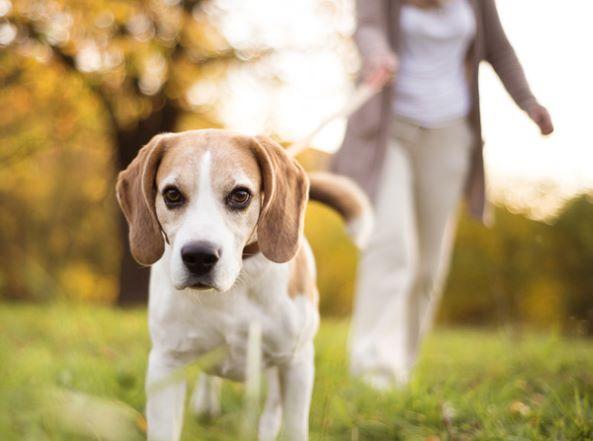 randonnée avec un chien