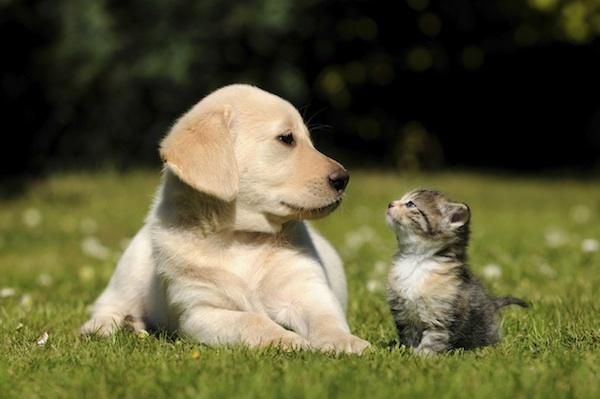 Protégeons les animaux !
