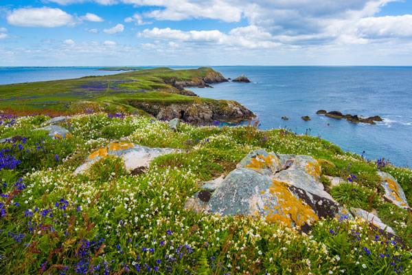 Beau paysage fleuri d'Irlande