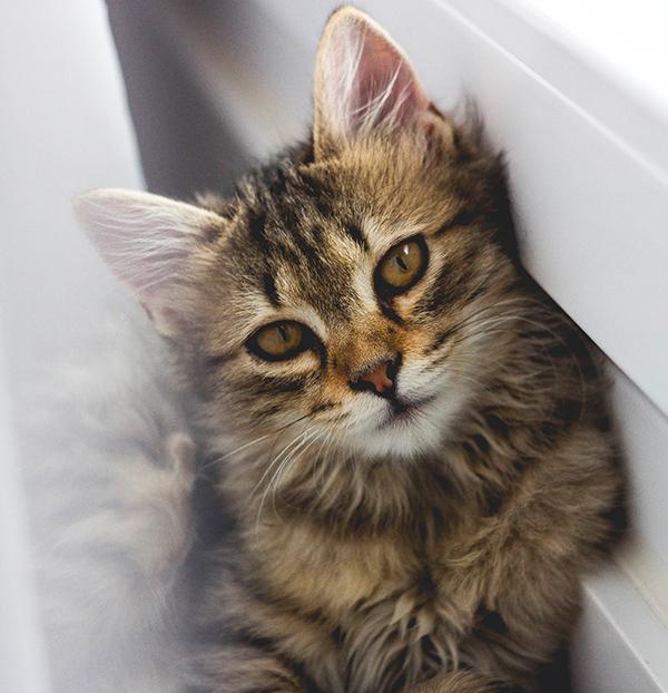 Petit chat sur le lit