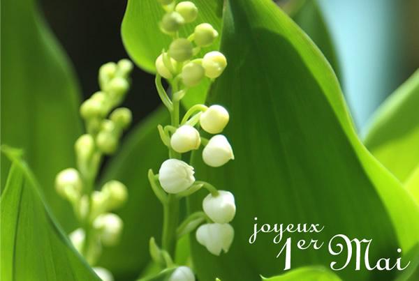 Muguet de 1er mai, fleur porte bonheur