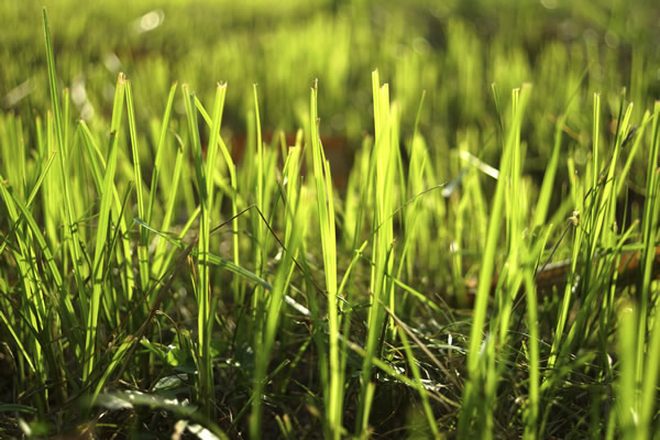 Jardiner au mois d'avril, découvrez nos conseils
