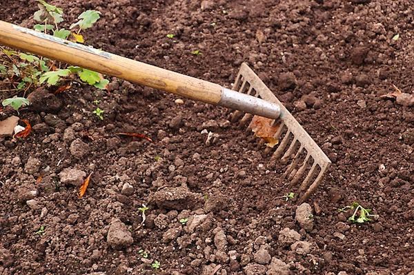 Passez le râteau sur les jeunes pousses de mauvaises herbes