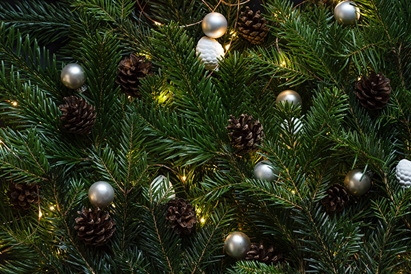 Choix du sapin de Noël