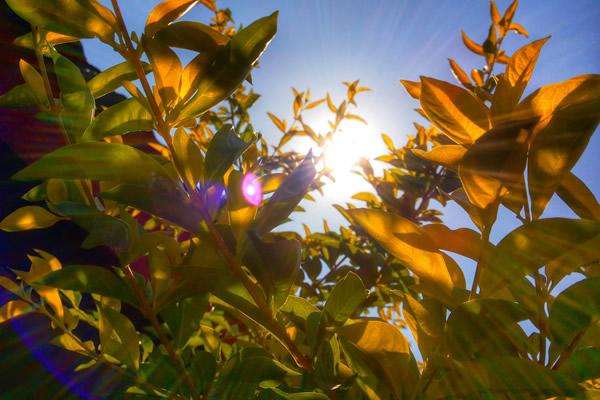 Le soleil dans le feuillage