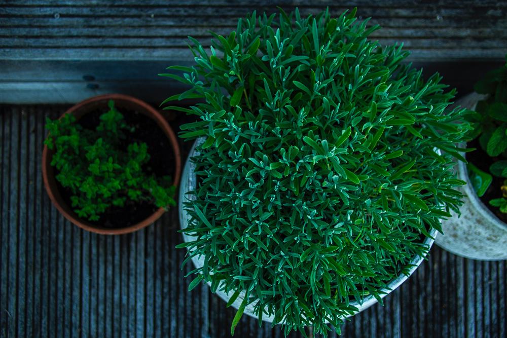Pots sur terrasse